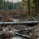 Bog in the Snow by Charles & Patricia   Harkins ~ Picture Oregon