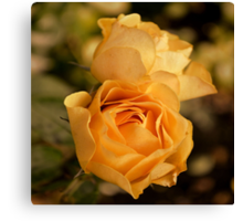 Two Yellow Roses Canvas Print