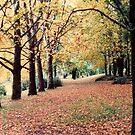 Autumn in Coonabarabran by georgieboy98