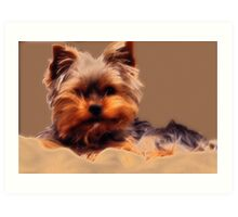 Yorkshire Terrier - Diffuse Glow Art Print