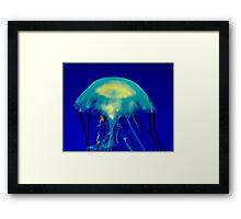 Jelly Framed Print