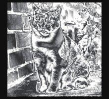 Silver cat by ashroc
