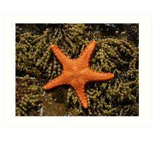 gold star Art Print