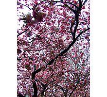 Blossom sky Photographic Print