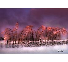 """"""" Iced Pink """" Photographic Print"""