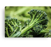 Portland Farmers Market Broccoli Canvas Print