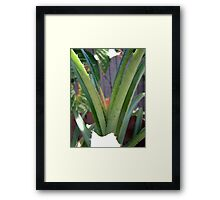 Dwarf Pineapple Framed Print