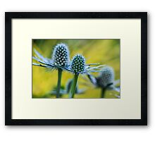 Spiny Dancer Framed Print