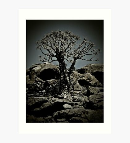 Quiver tree Art Print
