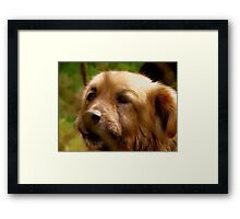 Behind the barrs Framed Print