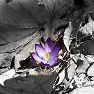 Spring... by LindaR