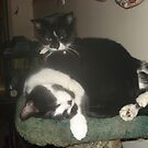 Cat-Nap by Becky Hartin