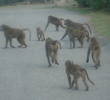 Monkey Central by Becky Hartin