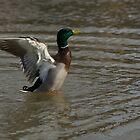 Take off! by greyrose