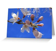 Spring has sprung!  Greeting Card