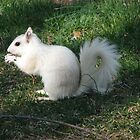 White Squirrel by spiritsfreedom