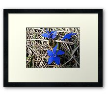 BLUE FLOWER AND INSECT Framed Print