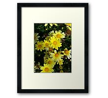 Dappled Daisies... Framed Print