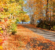 Fall colors, New England. by brians101