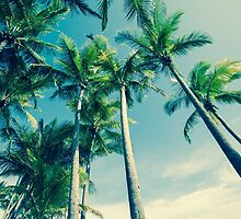 Palm trees by brians101