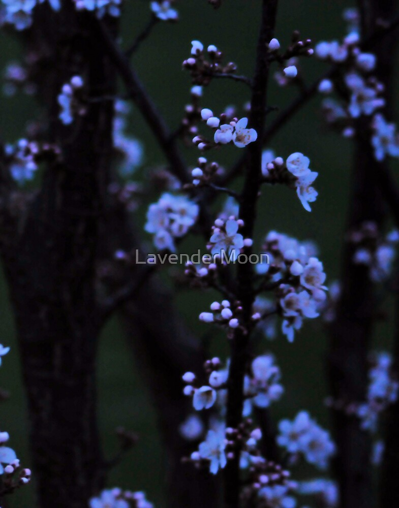 Nightfall Blossoms by LavenderMoon