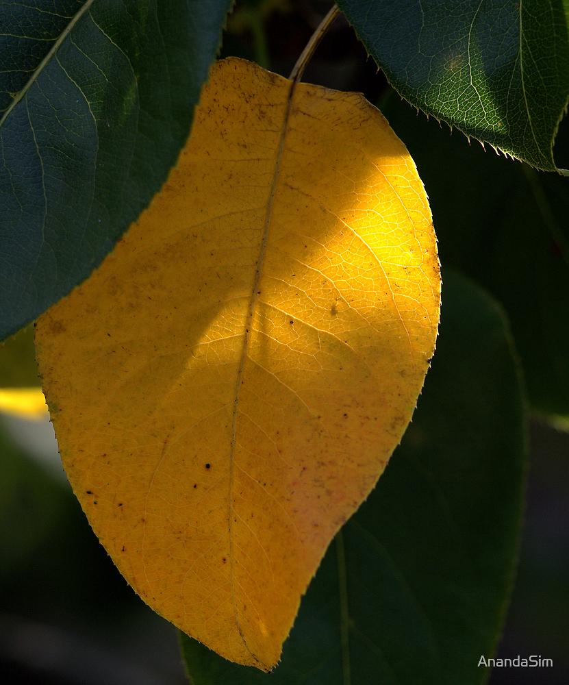 Mango by AnandaSim