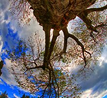 reach for the Sky by J Brad Campbell