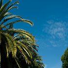 Palm Trees by Rick Symonds