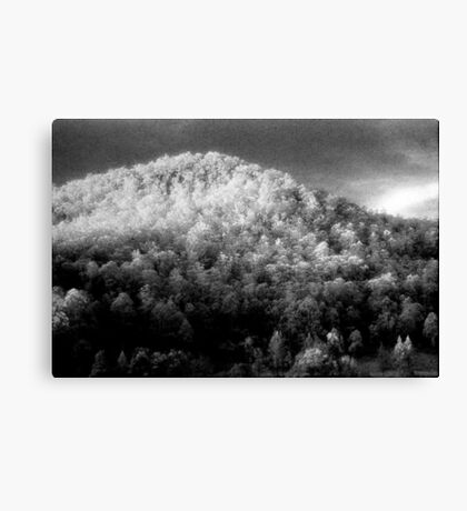 Big hill little trees............daniland  Canvas Print