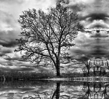 the tree by budrfli