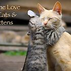 For the Love of Cats and Kittens by Clare Colins