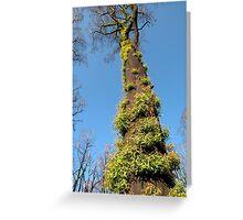 Bushfire Eucalyptus  Greeting Card
