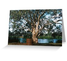 Murray River Gum Greeting Card