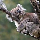 Hug-a-Tree Day by Mary Broome