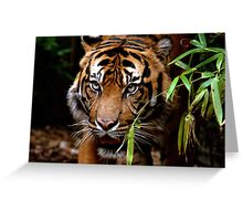 Sumatran Tiger VI Greeting Card