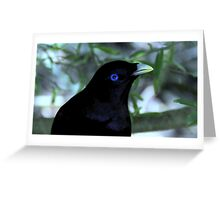 Male Satin Bower Bird III Greeting Card