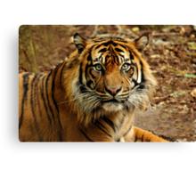 Sumatran Tiger II Canvas Print