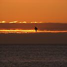 Gull silhouette by wahboasti