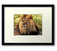 Lion II  Framed Print