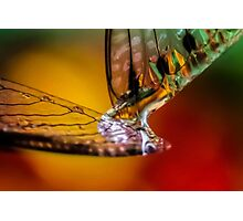 Celebration of Wings Photographic Print