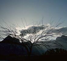 Desert Treescape by Snoboardnlife
