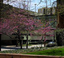 Trees Blooming in Downtown Atlanta by Jonicool