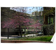 Trees Blooming in Downtown Atlanta Poster