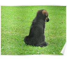GERMAN SHEPERD PUPPY Poster