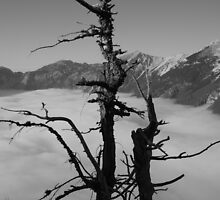 A Twig Above the Clouds by Jannaya