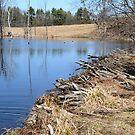 Beaver Dam by Anne Smyth