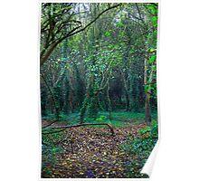 English Woodland Poster
