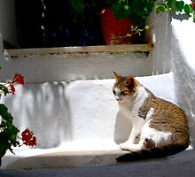 Cat in Mykonos by Galen  Stone