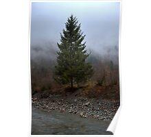 Lone pine tree Poster