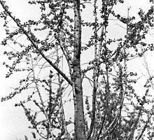A tree by maka1967